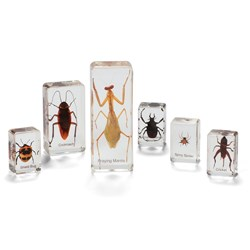 Mini Beasts Small Insects & Spiders Set