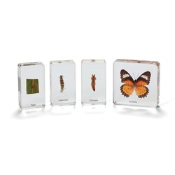 Mini Beasts Butterfly Life Cycle Set