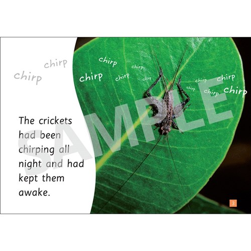 Insect Storybooks - Crazy Crickets