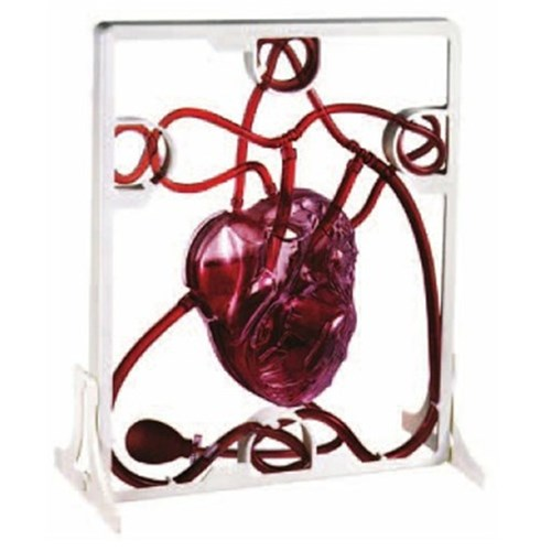 Working Pumping Heart Model